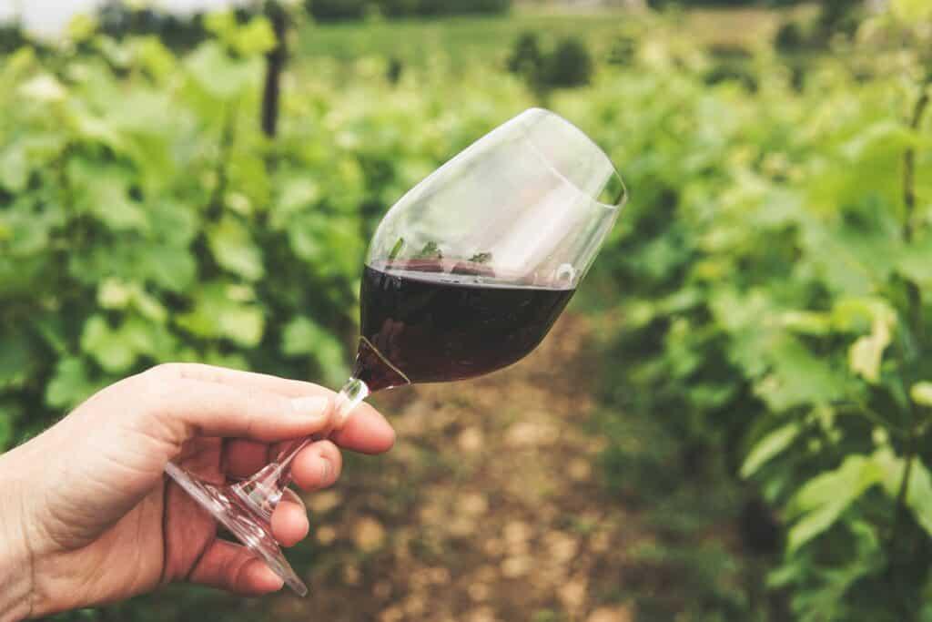 Barbera wine Glass