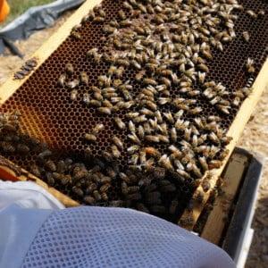 Honey BeeKeeper